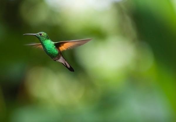 El colibrí uproof